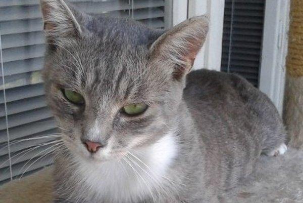 Kocúrik Aladár si hľadá nový domov ako jediná mačka v domácnosti.