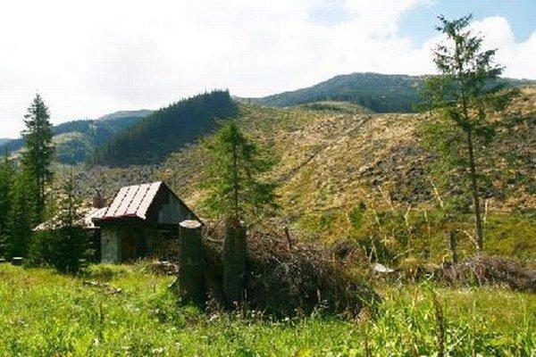 V oblasti Bory žijú aj kamzíky a svište.