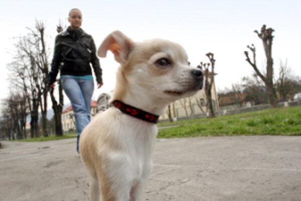 Daň za psa už musí v Prievidzi zaplatiť každý.