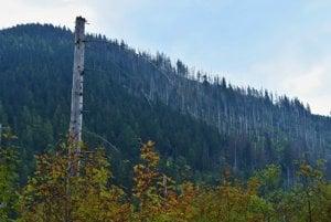 Vyschnutý smrek (vľavo), pod ním mladá jarabina a vyššie zdravý a poškodený les lykožrútom (vpravo).