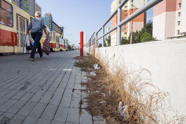 takáto burina vyrastá spod dlažby napríklad na električkovej zastávke Drobného.