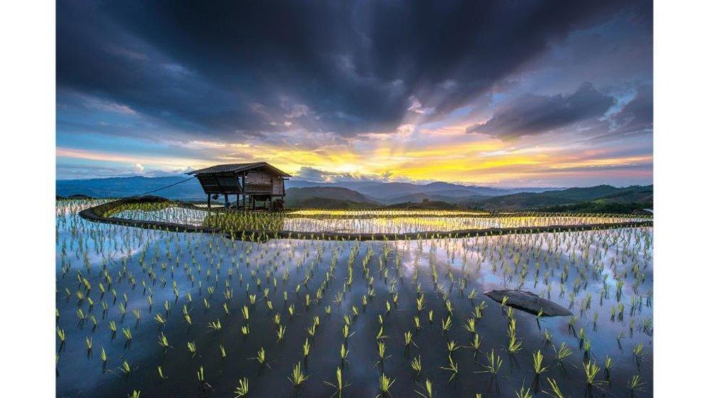 Ryžové terasy v Chiangmai, Thajsko.