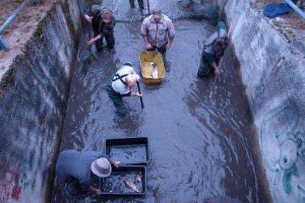 Rybári vylovili z brezianskej priehrady asi pol tony rýb.