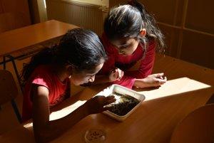 Žiačky ZŠ Rudňany hľadajú vodné živočíchy. Ukladajú ich do misky, aby mohli vidieť život pod mikroskopom.