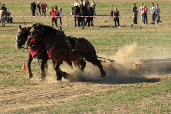 Furmanské kone predviedli svoju silu.