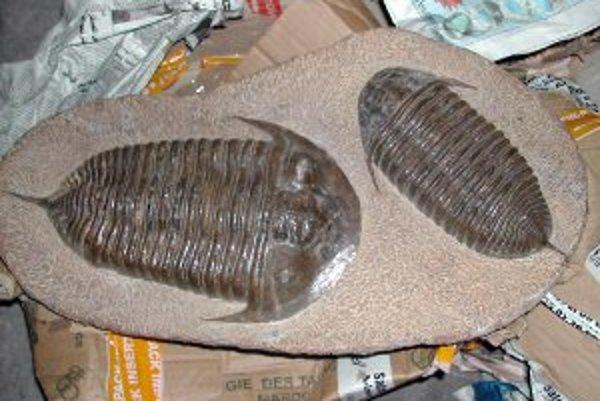Návštevníci múzea si budú môcť vytvoriť skameneliny.