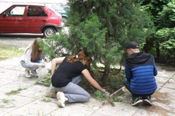 Študenti zbierali v uliciach Prievidze ohorky.