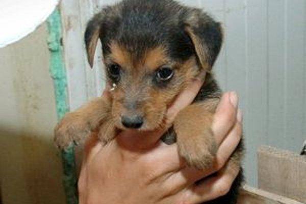 Súťaž je určená pre psov bez preukazu pôvodu.