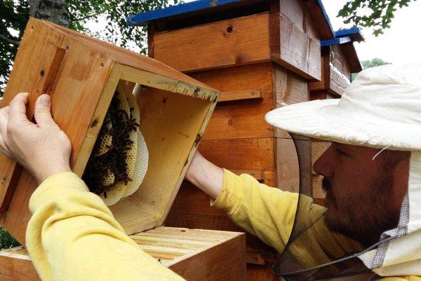Experimenty so včielkami možno prinesú zaujímavé poznatky.