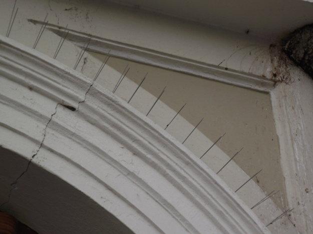 Ihlice proti holubom na historickej radnici.