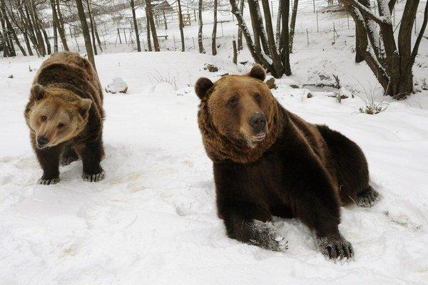 Medvedice spia, ale medvede sa už pobudili.