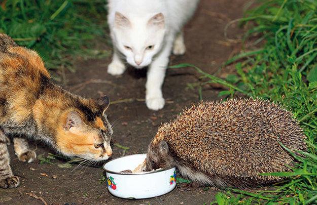 Túlavé mačky ľudia občas kŕmia.