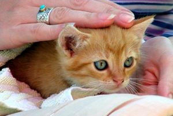 Kliešťmi je zamorených až 60 percent domácich zvierat, vidieckych a túlavých mačiek až 80 percent, hovorí Alica Kočišová. Blchy našli u takmer 90 percent skúmaných zvierat.