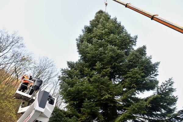 Stromček na bruselskom námestí Grand Place je zo Slovenska.