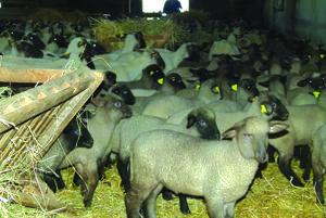 Štatistický úrad osloví vybrané farmy.