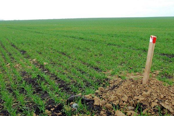 Naplnenie podmienok prevodu spoluvlastníckeho podielu na poľnohospodárskom pozemku bude skúmať pozemkový a lesný odbor okresného úradu.
