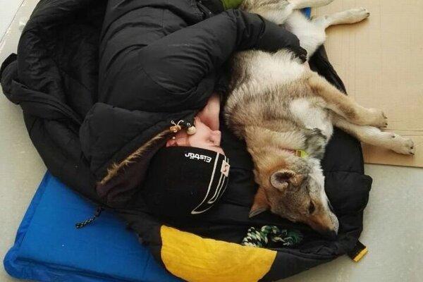 Nocovanie so psíkom na vykúrenej podlahe.