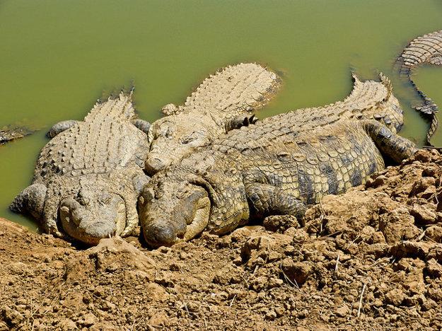 Krokodilfarm Animalia je jedným z najpopulárnejších parkov na Djerbe.
