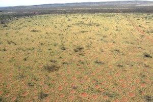 Letecký pohľad na rovnomerne rozložené vílie kruhy v Austrálii.