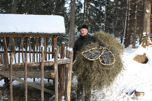 Pri preprave krmiva do lesa pomáhajú poľovníkom aj snežnice.