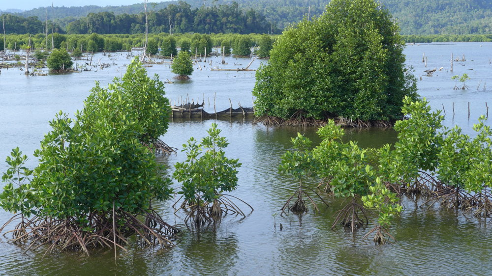 Kvôli vyrúbaniu mangrovov dochádza na pobrežiach aj k erózii pôdy