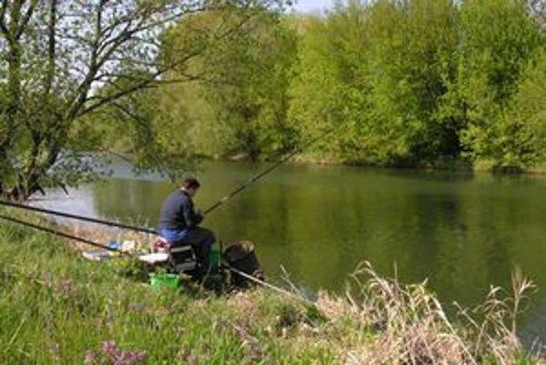 Dlhodobejšia konzumácia rýb z Nitry podľa rybárov nie je zdravá.