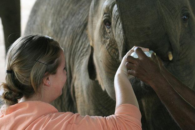 Srí Lanka: Doprajte si unikátne stretnutie so sloními mláďatami aj nedotknté pláže.