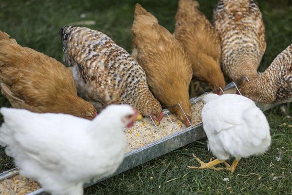 V kysuckom regióne sa zatiaľ ochorenie hydiny a voľne žijúceho vtáctva na vtáčiu chrípku nepotvrdilo.