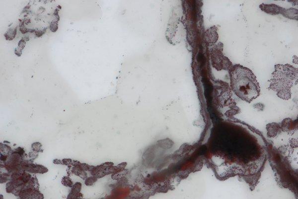 Železné vlákna a rúrky vznikli po skamenení baktérií, ktoré oxidovali železo.