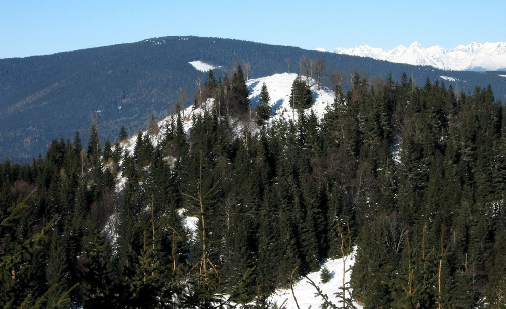 Pohľad na najvyšší bod Ondrejiska, Borovniak (v popredí), vpravo trčia Vysoké Tatry.