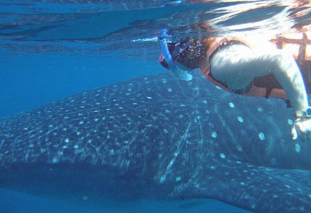 V Mexiku sa možno šnorchlovať aj v spoločnosti žralokov veľrybých.