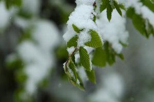 Zima a jar v jednom.