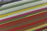 Nie všade v Európe sneží, tulipánové polia hrajú farbami