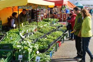 Viac ako 400 vystavovateľov ponúka návštevníkom množstvo druhov kvetín, drevín, záhradného nábytku a príslušenstva na 21. ročníku výstavy Gardenia, ktorá sa začala 20. apríla 2017 na nitrianskom výstavisku.