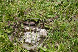 Na Juraja vraj tráva bujnie a hady vyliezajú zo zeme.