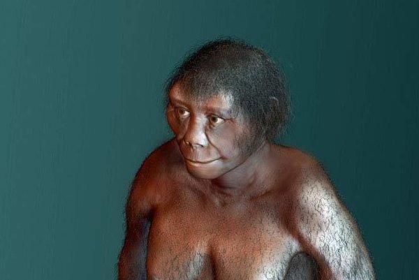 Homo floresiensis.