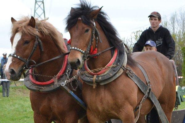 Furmani a ich kone zaujali deti aj dospelých.