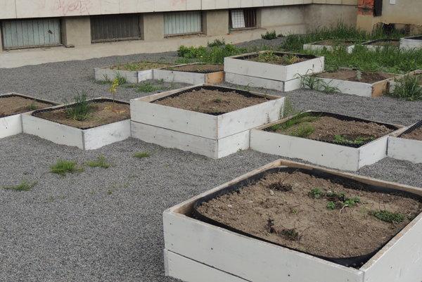 Záhrada pri kultúrnom centre.