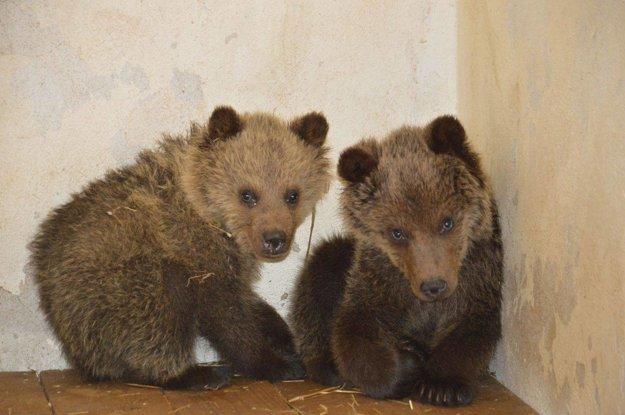 Mláďatá sú v karanténe v bojnickej Zoo.