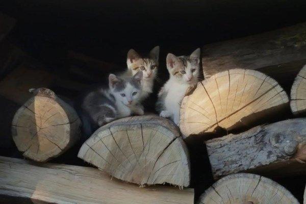 Tieto mačiatka hľadajú nový domov.