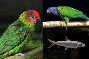 Nové zvieratá v bojnickej zoo.