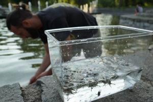 Záchranná akcia. Mladým ochrancom prírody neboli životy stoviek žabiek ľahostajné.