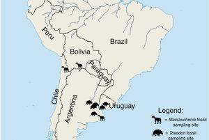 Miesta nálezov fosíli Macrauchénie a Toxodona.