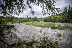 Do vyprázdnených riečisk po povodni prichádzajú vŕby alebo aj mirikovka nemecká (na snímke v stred), ktorá sa vyskytuje len na troch miestach na Slovensku. Jedným z nich je rieka Belá.