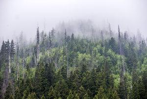 Les, ktorý je rôznorodý, lepšie odoláva kalamitám.