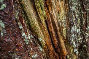 Drevo v pralese hrá všetkými farbami a všade sú lišajníky.