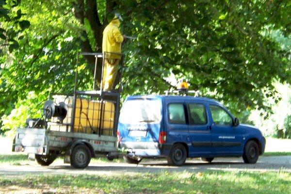 Postrek pagaštanov v mestskom parku ukončili krátko po deviatej.