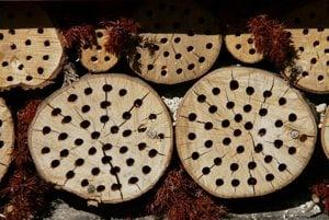 Úľ pre včely vyvŕtaný do dreva.