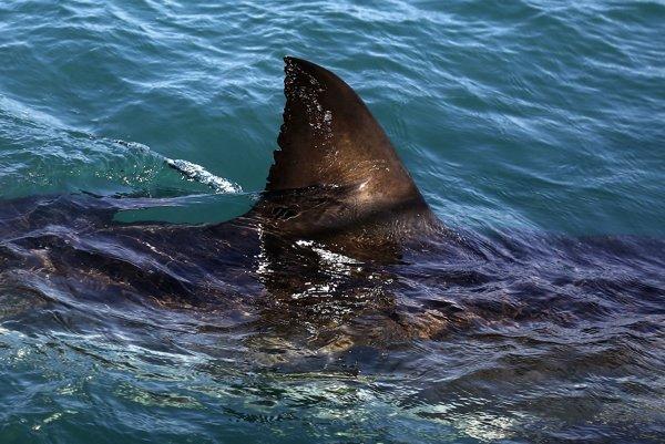 Žralok biely nebol reálny, ale simulovaný.