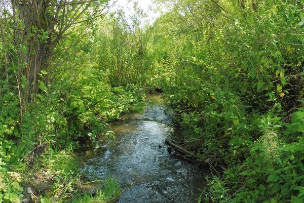 Pstruhový revír. Potok pod obcou.